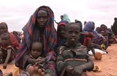 Hơn 3,9 triệu người dân Somalia đang thiếu lương thực trầm trọng