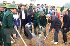 Phó Chủ tịch nước tham gia Tết trồng cây tại tỉnh Hòa Bình