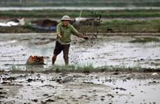 Đến chiều 8/2, gần 90% diện tích đã có nước gieo cấy vụ Đông Xuân