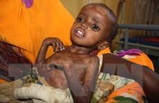 LHQ kêu gọi khẩn cấp ngăn chặn thảm họa chết đói ở Somalia