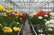 Hà Lan mở cửa tham quan miễn phí các khu nhà kính nông nghiệp