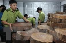 Phó Thủ tướng chỉ đạo xử lý vụ lâm tặc phá rừng nghiến cổ thụ