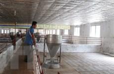 """Bộ Nông nghệp tìm giải pháp """"cứu"""" các hộ chăn nuôi lợn ở Đồng Nai"""