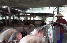 Bộ Nông nghiệp chỉ đạo hỗ trợ tiêu thụ sản phẩm thịt lợn
