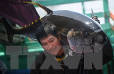 Xuất khẩu cá biển có thể đạt mốc 8 tỷ USD vào năm 2030