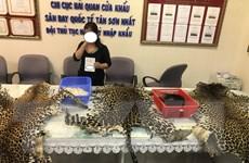 Phát hiện vụ nhập lậu sản phẩm động vật hoang dã quý hiếm quy mô lớn