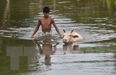 Hơn 200 người thiệt mạng do mưa lũ dữ dội ở miền Tây Ấn Độ
