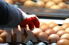 """Tổng thống Hàn Quốc xin lỗi người dân về bê bối """"trứng bẩn"""""""