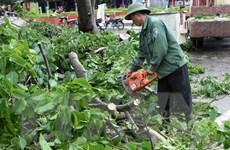 Thay thế cây xanh trên các tuyến phố chính ở thành phố Hạ Long