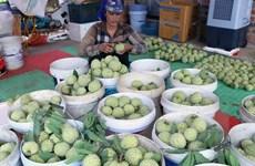 Nông dân Hải Dương thu lãi trên 200 triệu đồng/ha từ trồng na