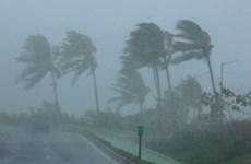 Các bang của Mỹ chạy đua với thời gian phòng ngừa siêu bão Irma