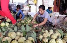 [Photo] Vùng na Chi Lăng-Lạng Sơn nhộn nhịp mùa thu hoạch