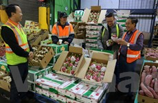 Trái thanh long tươi của Việt Nam bắt đầu được bày bán ở Australia