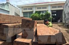 Kon Tum: Phát hiện hai điểm tập kết gỗ lậu tại xã Đắk Trăm