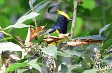 Phát hiện nhiều loài chim quý hiếm tại khu bảo tồn Xuân Liên