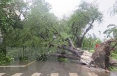 """Khánh Hòa nỗ lực cao nhất giúp dân """"gượng dậy"""" sau bão số 12"""