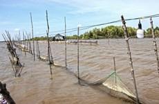 """Cà Mau xử lý nghiêm vụ lãnh đạo xã """"mở cửa"""" cho dân phá rừng nuôi sò"""