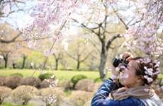 Gợi ý điểm đến hấp dẫn ở châu Á cho chuyến du xuân 2018