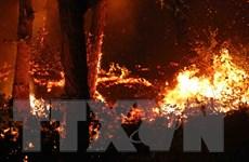 Quảng Ninh: Đang cháy dữ dội ở khu vực rừng thông tại Đại Yên