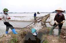Bộ Nông nghiệp đồng ý rút ngắn ngày lấy nước đợt 3 vụ Đông Xuân