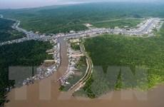 Hàng loạt cây rừng bị chết trên quy mô lớn ở Vườn quốc gia Mũi Cà Mau