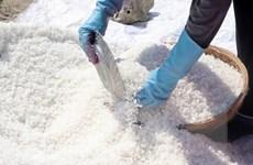 Diêm dân Phú Yên gặp khó vì muối được mùa nhưng rớt giá
