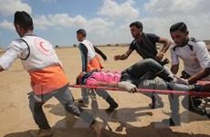 Tổng thống Pháp lên án quân đội Israel trấn áp người Palestine