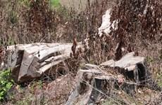 Vụ phá rừng Nam Kar ở Đắk Lắk: Kỷ luật 4 cán bộ kiểm lâm