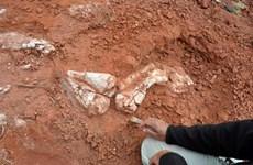 Argentina phát hiện hóa thạch khủng long cách nay hơn 200 triệu năm