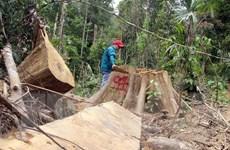 Vụ phá hơn 10,5ha rừng tại Quảng Trị: Đề xuất khởi tố vụ án hình sự