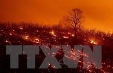 Cháy rừng lớn nhất lịch sử California, Tổng thống Mỹ tuyên bố thảm họa
