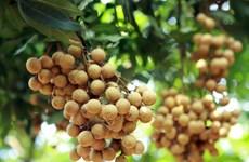 Thông tin giá nhãn Hưng Yên chỉ 4.000 đồng mỗi kg là thất thiệt