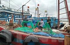 Bão số 4 không gây thiệt hại đáng kể khi đổ bộ vào tỉnh Thanh Hóa