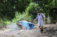 Dịch cúm gia cầm tại thành phố Hải Phòng đã được khống chế