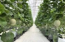 Phát triển nông nghiệp thông minh: Nhà nông đi đầu đầu tư công nghệ