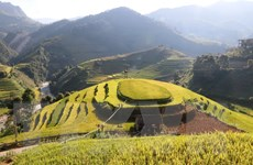 Yên Bái thông báo nối lại tổ chức hai sự kiện lễ hội văn hóa lớn