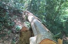 Điều tra vụ phá rừng và cướp tang vật giữa rừng phòng hộ Sêrêpốk
