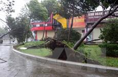 Bà Rịa-Vũng Tàu vẫn có gió mạnh, cây xanh tiếp tục đổ gây mất điện