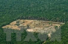 Rừng Amazon: Lá phổi xanh của thế giới bị tàn phá ở mức độ gây sốc