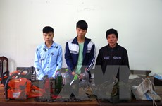Hà Giang tạm giữ hình sự 3 đối tượng khai thác gỗ trái phép