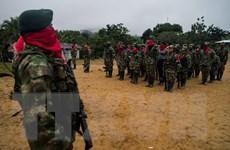 Colombia: ELN tuyên bố ngừng bắn dịp Giáng sinh và Năm mới