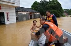 Thế giới tổn thất tới 85 tỷ USD do 10 thảm họa thiên tai