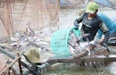 Xuất khẩu cá tra của Việt Nam hướng tới mục tiêu thu về 2,4 tỷ USD