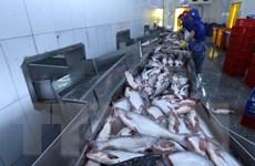 Thêm cơ hội cho ngành chế biến, xuất khẩu cá tra của Việt Nam