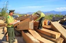 Đắk Lắk điều tra vụ vận chuyển 14m3 gỗ lậu tại huyện M'Đrắk
