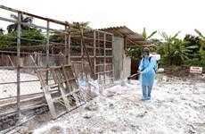 Hà Nội hỗ trợ tiền ngay cho người dân khi tiêu hủy lợn bệnh