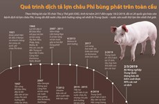 [Infographics] Quá trình dịch tả lợn châu Phi bùng phát trên toàn cầu