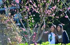 [Photo] Mê mẩn với sắc đào mùa Xuân ở Trung Quốc