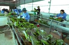 Việt Nam-Hà Lan sẽ hợp tác trong ứng dụng công nghệ sau thu hoạch