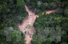 """Báo động đỏ với các """"thiên đường"""" sinh thái ở Brazil"""